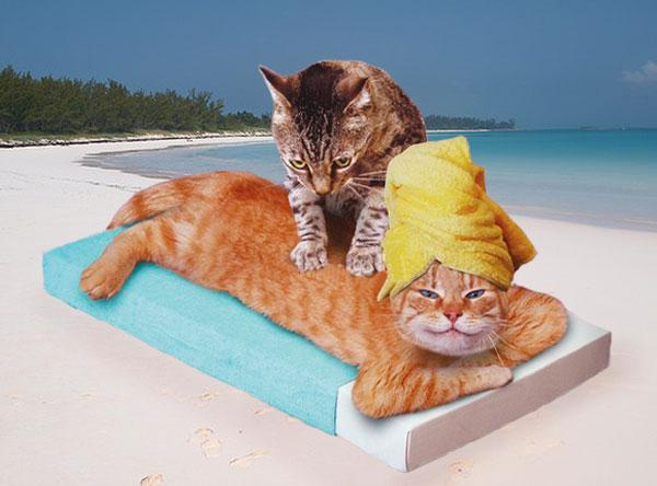Thai massage hits new heights in Phuket - Bangkok to see climax