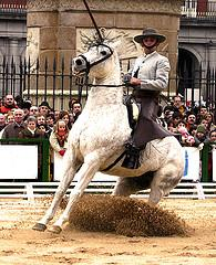 With two weeks remaining until the famous Jerez Horse Festival, every hotel within city limits are sold out.  Equestrian fans are now moving further outside the city center to find lodging for this world class event.  Photo Credit: stigmaslr