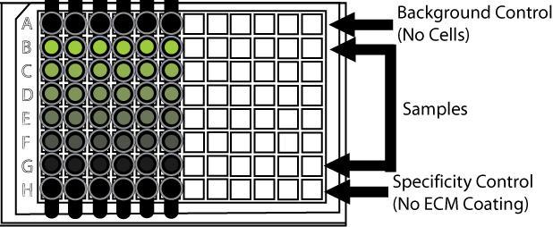Assay format for CultreCoat® Cell Adhesion Assays