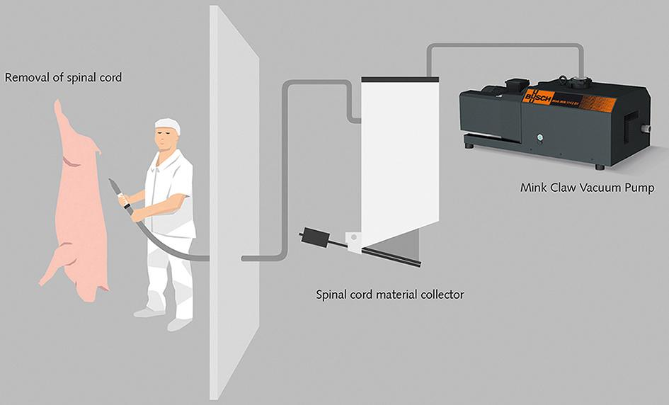 Principle drawing of the spinal cord removal system from MaqQuip Ltd.