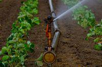 Climatic monitoring ensures optimal farm management with