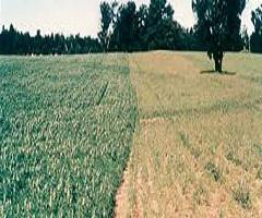 Global Agricultural Inoculant Market 2016: Industry Research,