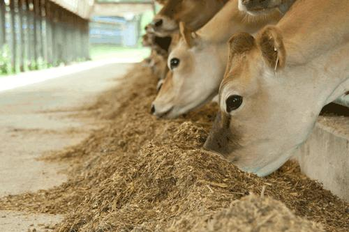 Global Animal Feed Additives Market continuous to increase
