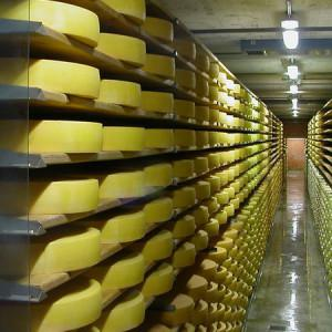 Global Processed Cheese Market
