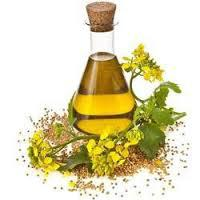 Global Dill Seed Oil Market