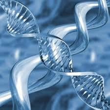Global DNA Forensic Market