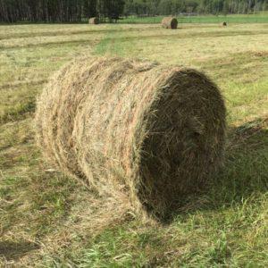 Global Alfalfa Hay Market
