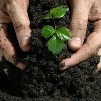 Global Bio-fertilizers Market Forecast 2017 - 2022 - Novozymes