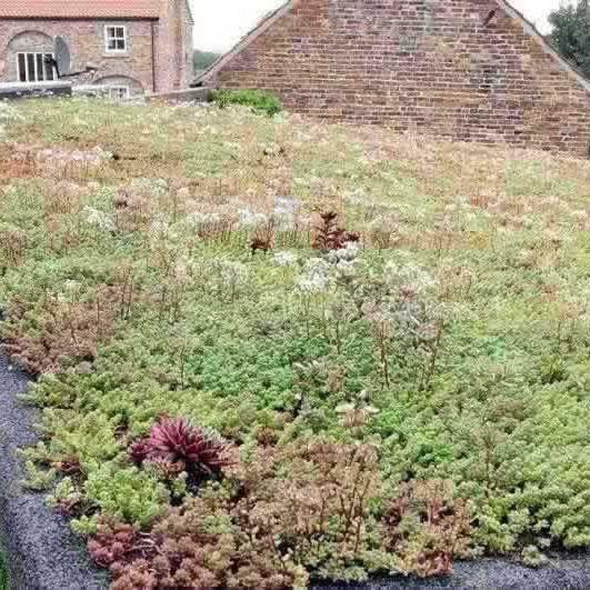 Sedum green roof in Rufforth near York
