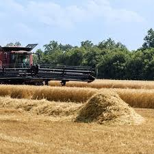 Global Wheat Straw Pulp Market 2017