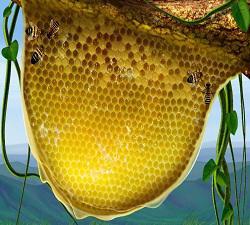 Global Natural Bee Honey Sales Market 2017 Top Players - Ambrosia