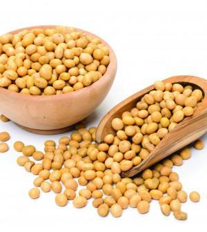 Non- Gmo Soybeans
