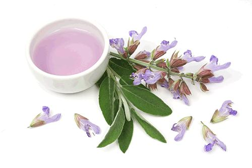 Global Plant Extracts Market 2017 - Indena, Network, Schwabe,