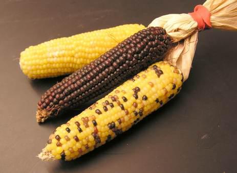 Corn Oil Market