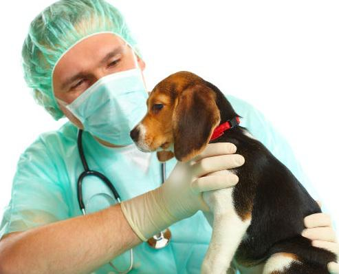 Global Dog Care Sales Market 2017 - Ancol Pet Products, Beaphar,