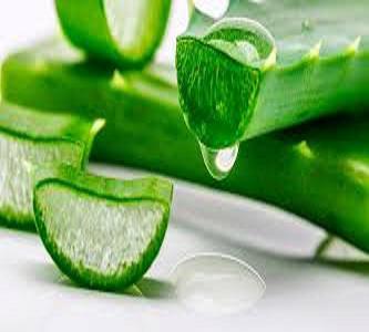 Aloe Gel Extracts
