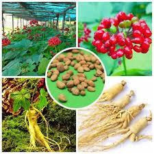 Ginseng Supplements