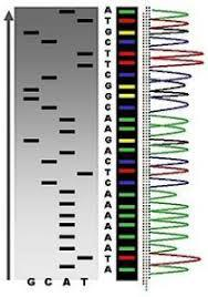 Sanger Sequencing Service Market Research Analysis Report 2017