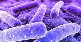 Mycoplasma Diagnostics Market 2016-2024 Industry Analysis,