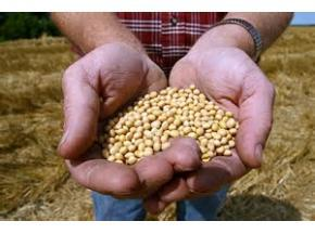 Global GMO Seed Sales Market Report 2017
