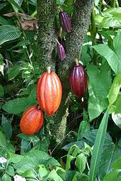 Global Demand for Cocoa Soars at Moderate Pace, Raking in US$ 14.5