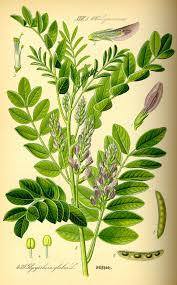 Herb & Spice Extracts Market Dynamics, Forecast, Analysis