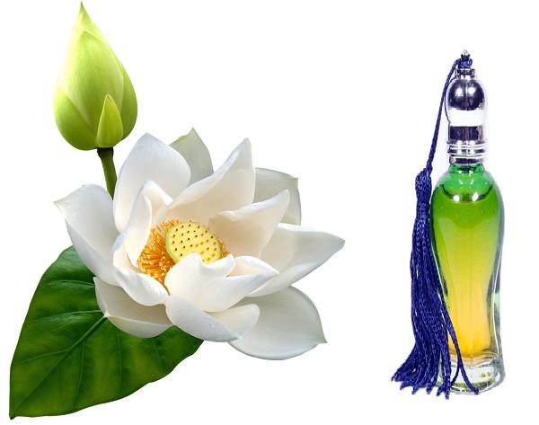 Aroma Essential Oil Store Presents Top Quality White Lotus Attar