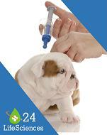 Vet Vaccines