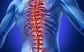 Spine Biologics Market