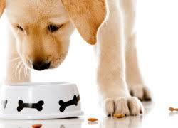 Prescription Pet Food Market