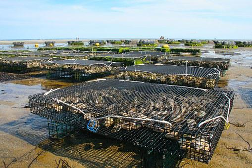 Aquaculture Market Shares, Strategies and Forecast Worldwide