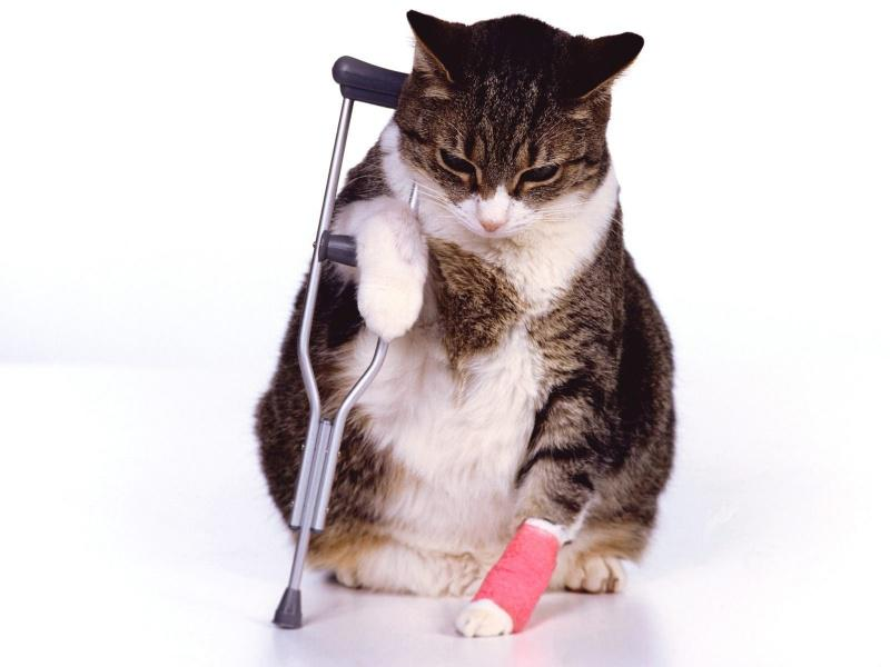 Pet Cat Insurance Market