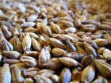Specialty Malt Market Reporting & Evaluation of Recent Industry
