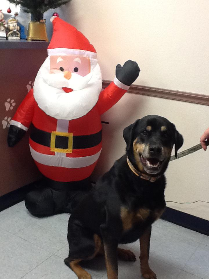 Making a Donation to Help His Fellow Four-Legged Friends