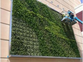Green Wall Market By Top Key Players- The greenwall