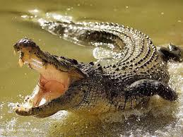 Breeding Crocodile Market