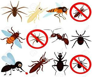 Global and Regional Insect Pest Control Market