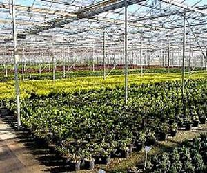 Global Greenhouse Horticulture Market