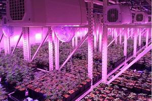 Global Mobile Vertical Growing Systems Market