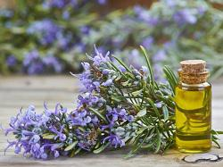 Rosemary Oil Market Demand and Growth 2018 To 2023