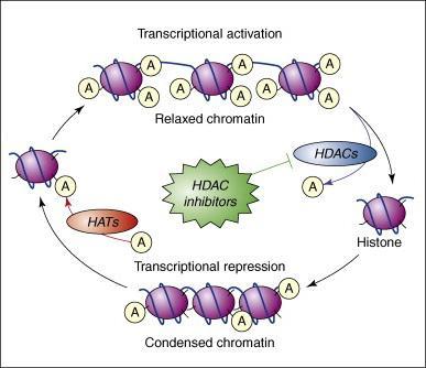 Histone Deacetylase (HDAC) Inhibitors Market
