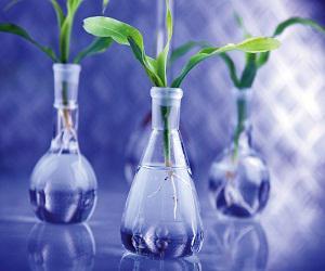 Global Bio Polyurethane (Bio-based Polyurethane) Market
