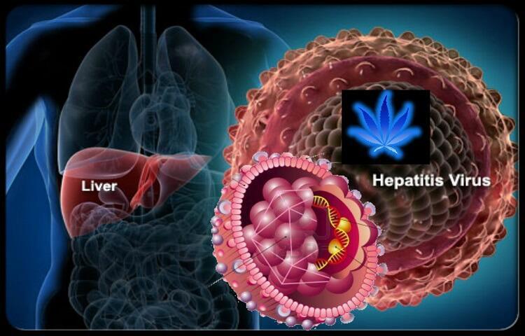 Image result for Hepatitis C Drugs Market