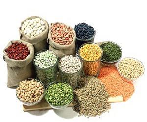 Global Vegetable Seed Market