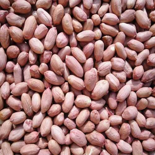 Peanut Seed Market