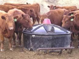 Liquid Feed Market