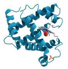 Enzymes Market
