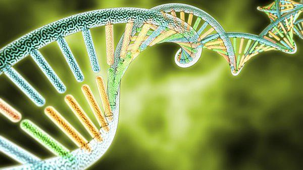 농업 시장을위한 글로벌 DNA 마이크로 어레이 2020 상위 플레이어 – Illumnia, Affymetrix, Agilent – The Courier