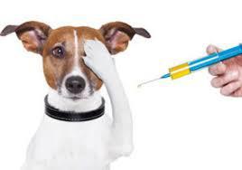 Companion Animal Healthcare Market