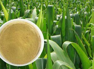 Chelate Fertilizer Market